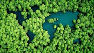 Τα υγιή δάση διατηρούν το κλίμα σταθερό Title