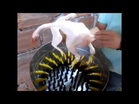Dedos de Goma para el Desplume de Pollos.