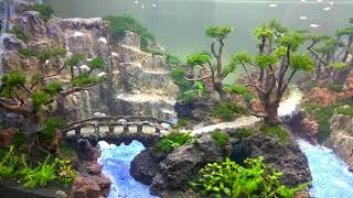 Amazing Aquascape By Khenzo Alviano. Its Not All About Discus... Enjoy