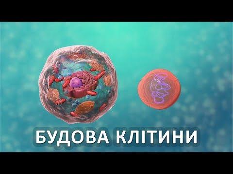 Test test, відео 2