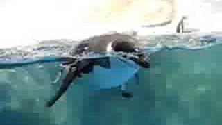海生館的呆企鵝