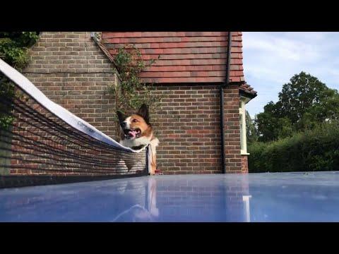 Σκύλος... διαιτητής σε αγώνα πινγκ πονγκ