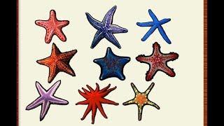 Красна звезда рыбалка