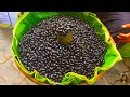Download Video Asian Street Food, Food Compilation In Cambodian Market, Lives In Cambodian Market