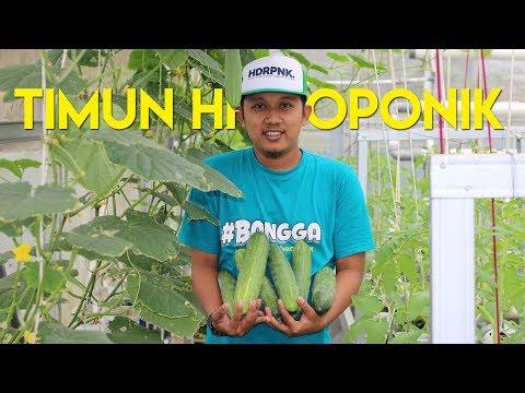TUTORIAL LENGKAP Cara Menanam Melon Hidroponik