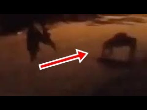 Two beings of light generate panic after their appearance in several Latin American cities/Up close Alien Probe/Very fast object caught by field camera in Orlando, Florida/Ufo fleet hovering over Raritan, New Jersey/Cigar shaped UFO filmed in Iceland/Glowing Unidentified Object Captured Underwater Off The Coast Of Miami/WOW Reptilian huge looking for Food/ Creepy 'humanoid' creature crawling around like crab on CCTV/Secret Apollo mission to the dark side of the Moon discover an ancient 4 km Spaceship