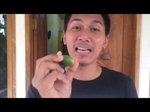 Video makan biji buah pinang muda
