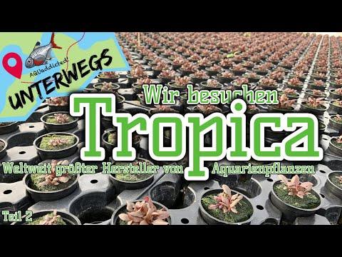 Vom Samen zur Wasserpflanze | Zu Besuch bei Tropica Teil 2 | AQUaddicted unterwegs
