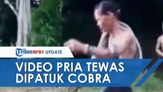Viral! Video Detik-detik Pria Tewas Digigit Ular Kobra saat Sedang Beraksi di Kalimantan Barat