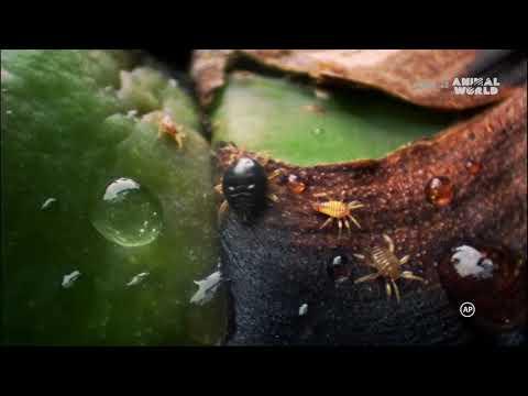 A könyökízület ízületi gyulladása 1 fok