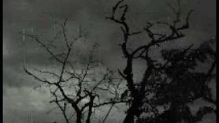 Video P67k - Ambient Fields (2009 - low quality)