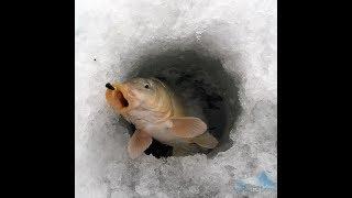 Ловля карпа на мормышку зимой