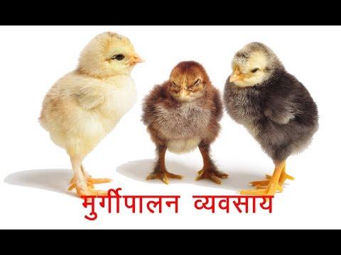 कैसे करें मुर्गीपालन व्यवसाय