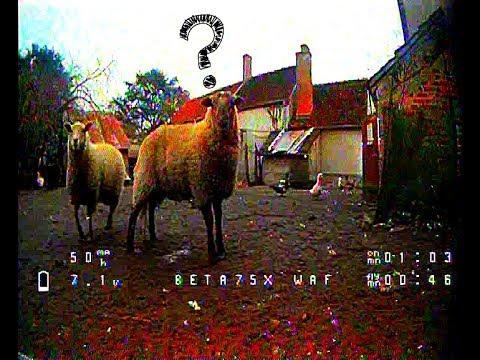 , title : 'BetaFPV 75X VS Sheeps