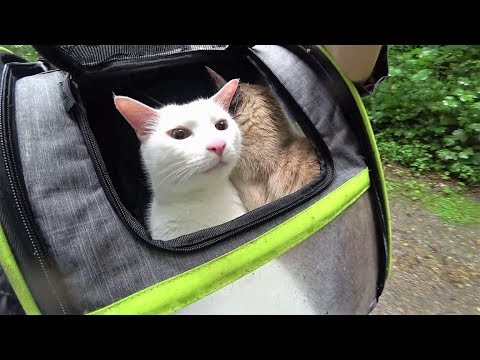 Cats Test New Cat Backpack in Rain (First Time) || Katzen testen Katzenrucksack im Regen (Erste Mal)