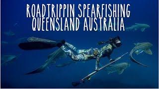 Spearfishing QLD Australia: Sharks + Cobia + Jacks + Jew + Marlin (Underwater Ally Adventures) Ep.16