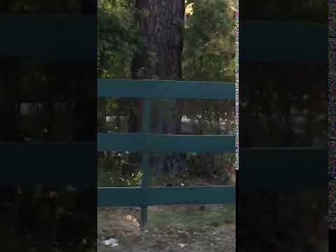 Video Of Camp Gifford at Deer Lake, WA