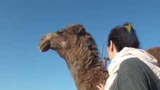Desierto de Maranjab - Irán
