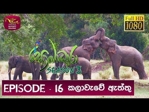 Sobadhara - Sri Lanka Wildlife Documentary | 2019-07-05 | Sri Lankan Elephant