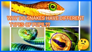 why do snakes have different types of pupils ??|| Snake eyes|| Myths and  Facts about  snakes