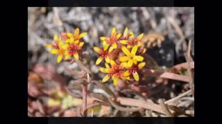 PATAGONIA - Flora & Fauna