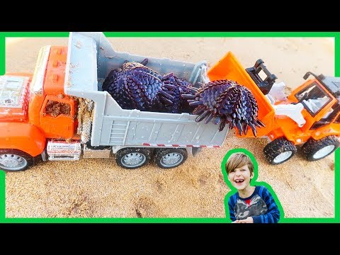 Trucks for Kids | Dump Truck Delivers Sea Urchins