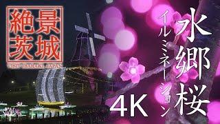 【絶景茨城】水郷桜イルミネーション|VISIT IBARAKI, JAPAN