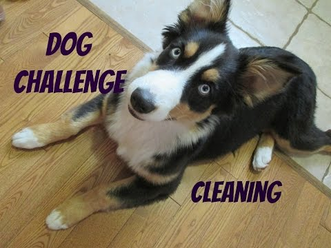 DOG CHALLENGE : Cleaning The House