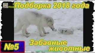 Забавные животные . Выпуск №5 . ( Подборка видео 2018 года)