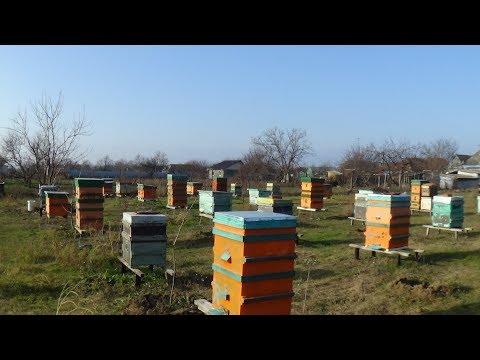 Обзор пасеки в Новом Году 1.01.2018 пчела