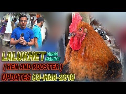 Lalukhet Sunday Hen & Chick Market 3-March 2019 Latest Updates (Jamshed Asmi Informative Channel)