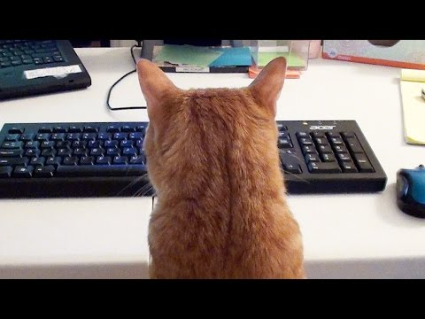 What It's Like To Work With A Feline