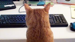 Como trabalhar e manter seus gatos com você
