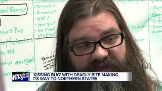 Bloodsucking 'kissing bug' that usually bites people on the face found in Delaware for first time