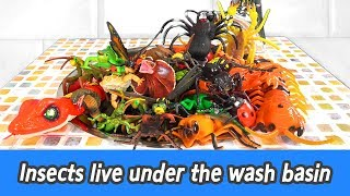 [EN] Insects live under the wash basin, insect names for children, animals animationㅣCoCosToy