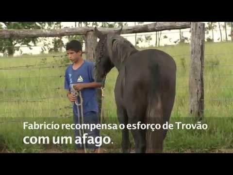 <w:portuguese_title