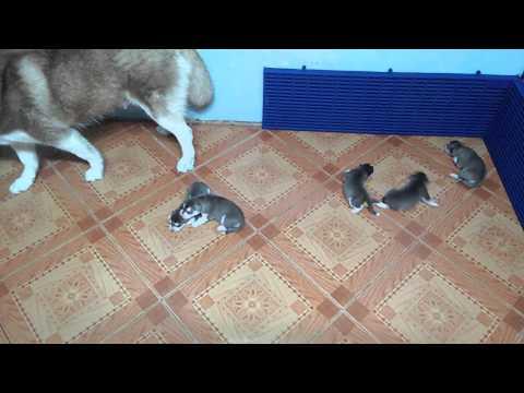 จากแมวสามารถส่งพยาธิ