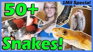 Reptile Room Tour 2019!! Meet My Pets!