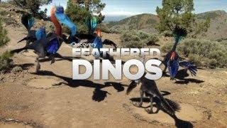 Feathered Dinosaurs: Bird Ancestors?!