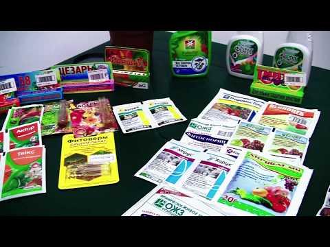 Обработка комнатных растений от вредителей и болезней. Советы от компании Ваш сад