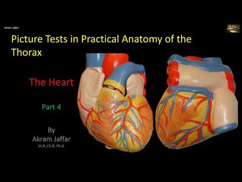 Test obrazkowy z anatomii klatki piersiowej - serce (część 4)