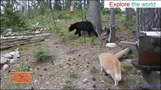 FEARLESS CATS take On Cobra, Dogs, Bear, Alligator, Fox