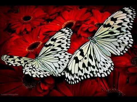 nyaki platyhelmint pillangók)