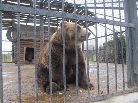 Едем в Зоопарк