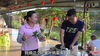 前幾個月種的秋葵熟了,巧婦9妹摘了一籃子,看9哥怎麼煮? 【巧婦9妹】