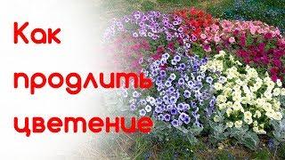 Любимые цветники 23 августа