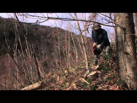 【山としごと】七ヶ宿の白炭 その1 木の伐り出し
