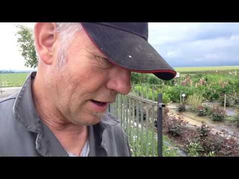 Der Arzt flebolog der Kirower Bezirk