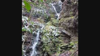 preview picture of video 'Javaloha Coffee Farm Western Waterfall February 2009'
