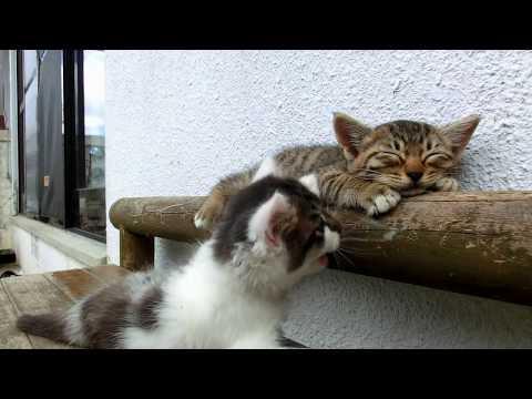 Il gattino ha davvero un gran sonno